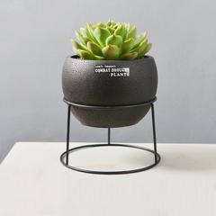 新品多肉植物盆栽黑色花盆配简易铁架时尚家居水泥花盆套装